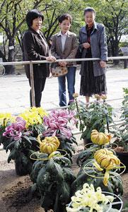 和歌山公園表坂登り口付近一帯で開かれている菊花展