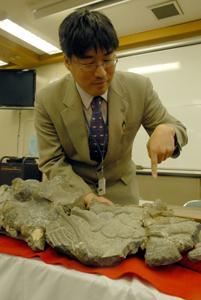 大型海生爬虫類 モササウルス類