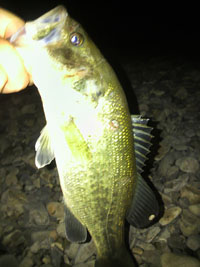 bass1027.jpg