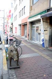 inoshishi02.jpg