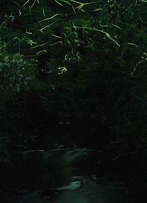 katohotaru