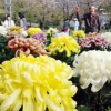 第55回和歌山公園菊花展