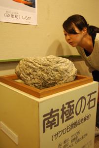 南極大陸 南極の石