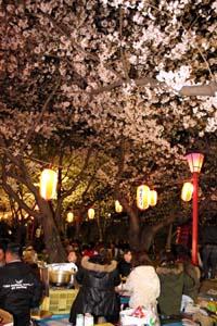 夜桜見物でにぎわう和歌山公園