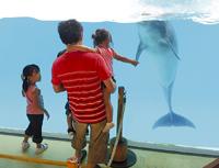 イルカと交流する親子。 イルカと別れを惜しんでいるように見えた