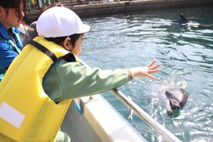 イルカに餌をやる園児