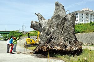 巨大流木の保存処理や運搬作業が始まった