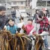 ワカメの刈り取りを体験する参加者