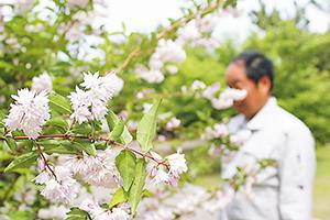 満開を迎えた卯の花