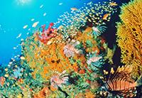 サンゴに群れる熱帯魚(提供:和歌山県)
