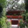 楼門に倒れかかった松の木