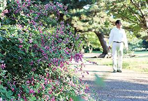 公園でかわいらしい花を咲かせている