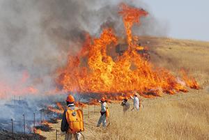 大きな炎が立ち上る草原