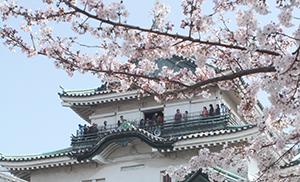 さらなる来場者増に期待の和歌山城(4月)