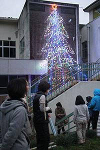 校舎に輝くツリー
