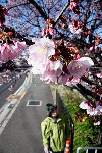 春の訪れを感じさせる桜(3日)
