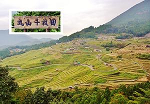 丸山千枚田(展望台から全景を望む)