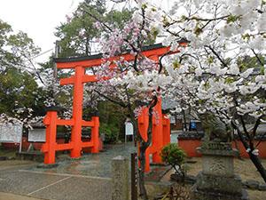 桜を愛でながら春の和歌浦を楽しもう(玉津島神社)