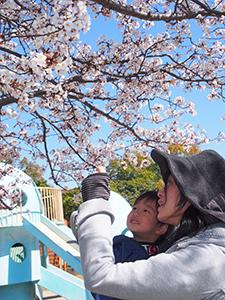子どもを抱いて山桜の花を見せる母親