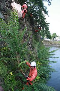 ロープ1本で体を支えて除草する隊員