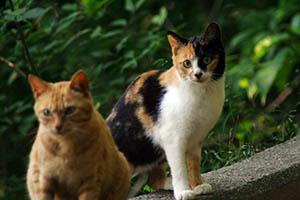 地域猫と人の共生の実現が望まれる