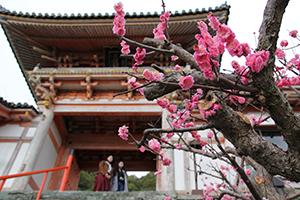 濃いピンクの梅が咲き誇る境内