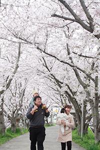 桜のトンネルのようになっている参道
