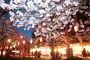 夜桜や屋台でにぎわう和歌山公園(10日)