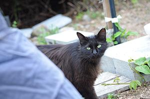左耳に手術が行われた証しのVカットが見える地域猫(住民提供)