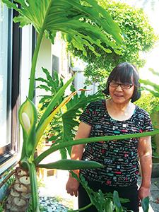 開花したセロームを見つめる浜田さん