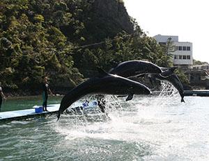 「くじらの博物館」のクジラショー