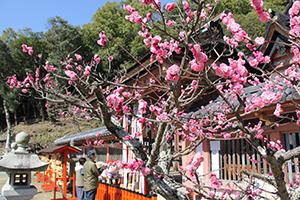 境内で咲く愛らしい梅の花