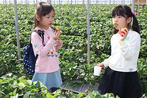 イチゴを味わう子どもたち