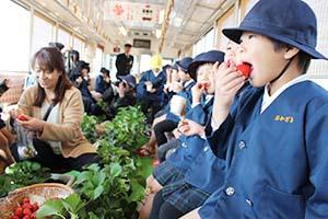 イチゴを頬張る園児たち