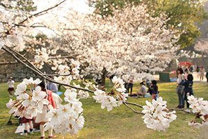 花見客でにぎわう和歌山公園