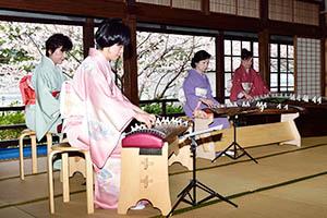 桜を背景に優雅な箏の演奏も(玉津島保存会事務局提供)