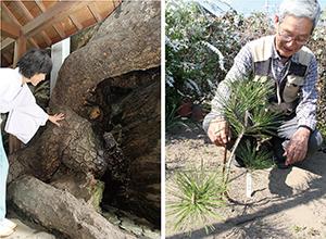 残された深い根を見つめる遠北さん㊧、松の成長を見守ってきた奥津さん
