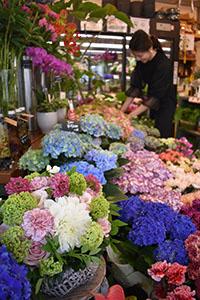 色とりどりの花でいっぱいの店内(和歌山市の「GA‐EN」で)