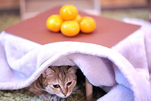 猫用サイズのこたつ付きで人気