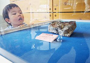 体の形がしっかりと残る貴重な化石
