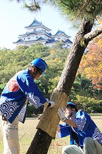 こもを巻く和歌山城整備企画課の職員