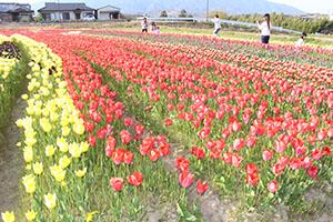さまざまな色の花を楽しめる