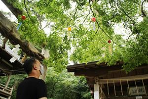 境内の木々につり下げられた風鈴