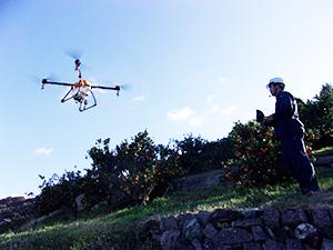 ミカン畑を飛行するドローン