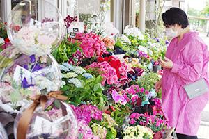 色とりどりの花が並んでいる